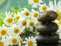 Pyramid of black stones, chamomile flowers Royalty Free Stock Photo