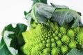 Pyramid broccoli romanesco Royalty Free Stock Photo