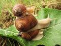 Pyramid of three snails