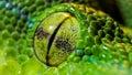 Python Eye