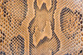 Python skin texture Royalty Free Stock Photography