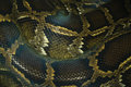 python snake skin and scales pattern macro Royalty Free Stock Photo