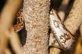Python Snake wrapped close-up around a branch Royalty Free Stock Photo