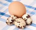 Quail and chicken eggs Stock Photos