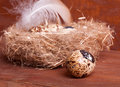 Quail egg near the nest with eggs Stock Photos