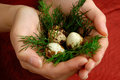 Quail eggs 3 Royalty Free Stock Image