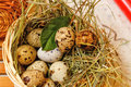 Quail eggs in basket. Delicatessen . Royalty Free Stock Photo