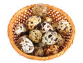 Quail eggs basket of isolated on white Stock Photos