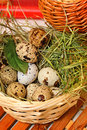 Quail eggs in basket. Protein. Royalty Free Stock Photo