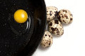 Quail eggs on black pan Stock Image