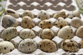 Quail eggs in the cardboard packing close up Royalty Free Stock Photos