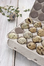 Quail eggs in the cardboard packing on the white table wooden verical Stock Photography
