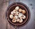 Quail eggs in ceramic bowl brown spotted Royalty Free Stock Images