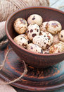 Quail eggs in ceramic bowl brown spotted Stock Photography