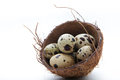 Quail eggs in coconut nest on white background Royalty Free Stock Photos