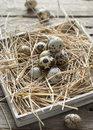 Quail Eggs Easter Royalty Free Stock Photos