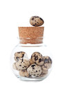 Quail eggs in a jar Stock Images
