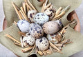 Quail eggs on linen cloth in a bowl Royalty Free Stock Images