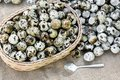 Quail eggs a lot of in basket and heap shell quail eggs on sackc Royalty Free Stock Photo