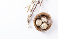 Quail eggs in a nest with feathers and pussy willow branch on a white background for Easter Royalty Free Stock Photo
