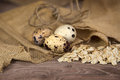 Quail eggs with oats on wood background Royalty Free Stock Photography