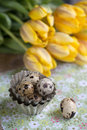 Quail eggs still life image with and yellow tulips on table and with small metal baking form Stock Image