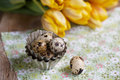 Quail eggs still life image with and yellow tulips on table and with small metal baking form Royalty Free Stock Photo