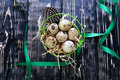Quail eggs in the straw in a green bucket on wooden background top viwe Stock Images