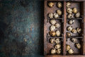 Quail eggs in wooden box on rustic background top view place for text Stock Photo