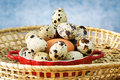Quail's eggs for easter time Royalty Free Stock Images