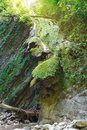 Quaint marvellous rocks covered with ivy and moss on slopes of the forest ravine Royalty Free Stock Photo