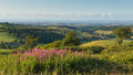 Quantock hills somerset england uk countryside views towards hinkley point nuclear power station and bristol channel pink flowers Royalty Free Stock Photo