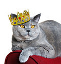 Queen of cats Royalty Free Stock Photo