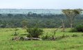 Queen elizabeth national park in uganda natural scenery the africa Royalty Free Stock Images