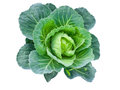 Queen of the vegetable garden isolated green cabbage on white background Royalty Free Stock Image