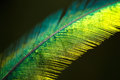 Quetzal feather very shallow depth of field Royalty Free Stock Images