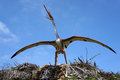 Quetzalcoatlus, pterosaur. Model of dinosaur. Royalty Free Stock Photo