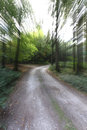 Quickly on the forest road - zoom Royalty Free Stock Photo
