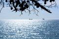 Quiet afternoon at sea with tree silhouette Stock Image