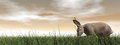 Quiet hare d render one standing in the grass by brown sunset Royalty Free Stock Photo