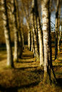 Quiet landscape forest Royalty Free Stock Image
