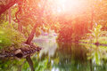 Quiet river in a tropical forest during sunset. Royalty Free Stock Photo