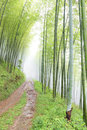 Quiet road in the bamboo forest Stock Photos