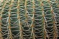 Quills and prickly cactus spines of a dangerous succulent plant very Royalty Free Stock Photos