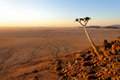 Quiver tree aloe dichotoma in the namib desert landscape is a coastal southern africa name is of nama origin and means vast place Royalty Free Stock Image