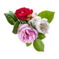 Röda vit och rosa färgrosblommor Arkivfoton