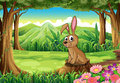 A rabbit above the stump at the forest Royalty Free Stock Image