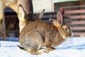 Rabbit At An Animal Park