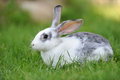 Rabbit baby in grass summer day Stock Images