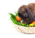 Rabbit in a basket with Easter eggs Stock Photography